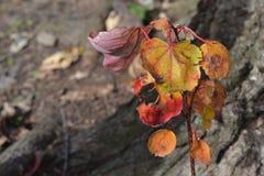 Листья падения на стержне Стоковые Фотографии RF