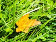 Листья падения на утесе Стоковые Изображения
