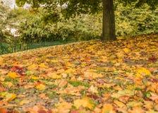 Листья падения осени в парке стоковая фотография rf