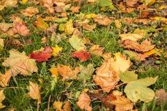 Листья падения осени в парке стоковое фото rf