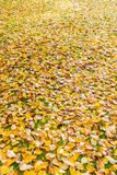 Листья падения осени на траве Стоковые Изображения RF