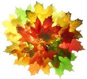 листья падения осени Стоковые Изображения RF
