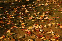Листья падения отдыхая на пруде весны стоковые изображения rf