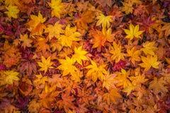 Листья падения показывая сезонное изменение Стоковые Фотографии RF