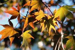 Листья падения при солнце светя до конца стоковые изображения