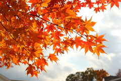 Листья падения против солнечности Стоковое Изображение RF
