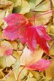Листья падения Стоковые Изображения RF