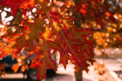 Листья падения (en) Стоковые Изображения