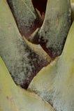 Листья пальмы Стоковая Фотография