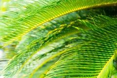 Листья пальмы стоковое изображение rf