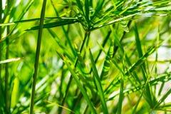 Листья пальмы стоковая фотография rf
