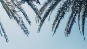 Листья пальмы Стоковые Фотографии RF
