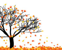 листья переплели Стоковое Фото