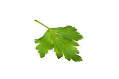 Листья петрушки стоковые изображения