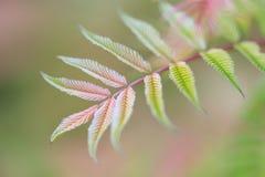 Листья пинка и зеленого цвета Стоковая Фотография