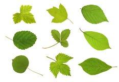 листья плодоовощ собрания Стоковая Фотография RF