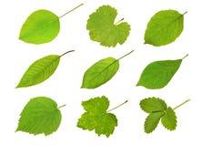 Листья плодоовощ собрания Стоковое Изображение RF