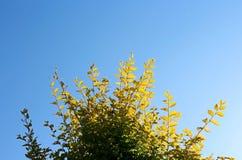 Листья под голубым небом Стоковые Изображения RF