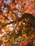 листья пожара Стоковое Изображение RF
