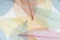 листья покрашенные предпосылкой multi Стоковые Фотографии RF