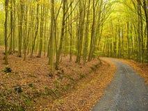 Листья покрыли дорогу в лесе деревьев бука в осени/падении Обширная листва деревьев лист в осени природа ослабляя Сельская местно Стоковая Фотография