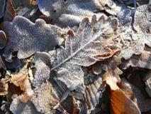 Листья покрытые гололедью упаденные Стоковая Фотография RF