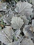 Листья покрытые с малыми ледяными кристаллами Стоковые Изображения