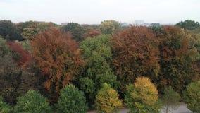 Листья получают другой цвет в начале осени сток-видео