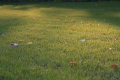 листья поля стоковое фото rf