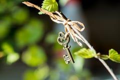 Листья почки макроса весны березы на черной предпосылке Винтажная ключевая смертная казнь через повешение на ветви стоковые фото
