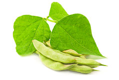 листья почки фасолей Стоковые Фото