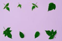 Листья поленики стоковое изображение rf