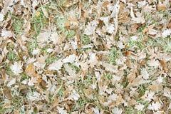 Листья полесья Стоковое фото RF