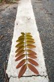 Листья положенные на белую линию Стоковые Изображения RF