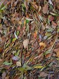 Листья положенные рекой Рейном Стоковые Изображения RF