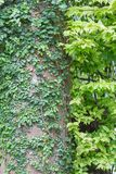 листья предпосылки зеленые стоковые фотографии rf