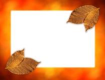 листья предпосылки золотистые Стоковые Изображения RF