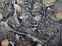 листья предпосылки коричневые замороженные Стоковая Фотография
