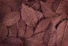 листья предпосылки коричневые Стоковое Изображение RF
