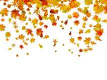 листья предпосылки осени Стоковая Фотография