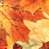 листья предпосылки осени Стоковые Фотографии RF