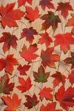 листья предпосылки осени Стоковое Изображение RF