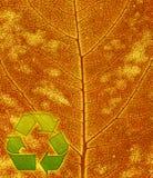 листья предпосылки рециркулируют символ Стоковое Изображение