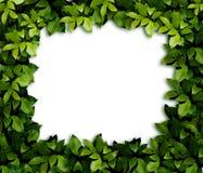 листья предпосылки стоковое изображение rf
