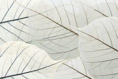листья предпосылки Стоковые Фотографии RF
