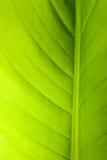 листья предпосылки Стоковые Изображения