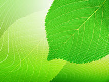 листья предпосылки Стоковые Изображения RF