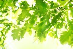 листья предпосылки стоковые фото