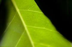листья предпосылки Стоковая Фотография RF