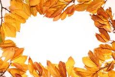 листья предпосылок осени Стоковая Фотография
